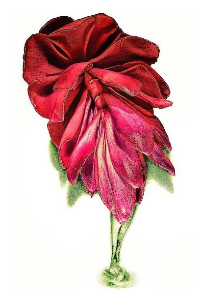 Flowererotic4
